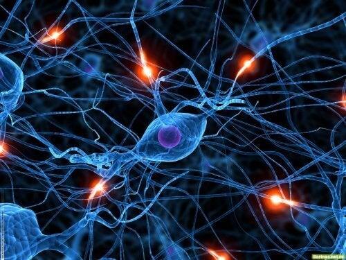 Клетките в човешкото тяло се променят с годините