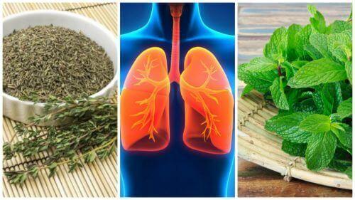 8 билки за подобряване здравето на белите дробове