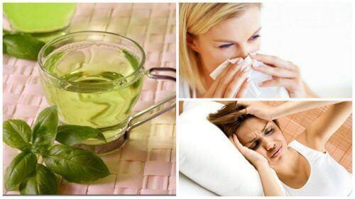 8 ползи от ежедневната консумация на чай от босилек