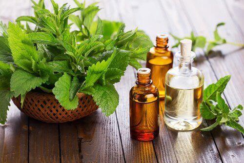 масло от мента - едно от често използваните домашни средства при афти