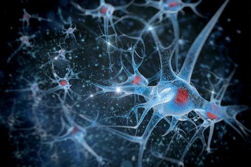 Ползи от морската сол за мозъка