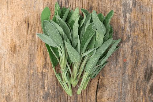 билки за белите дробове - градински чай