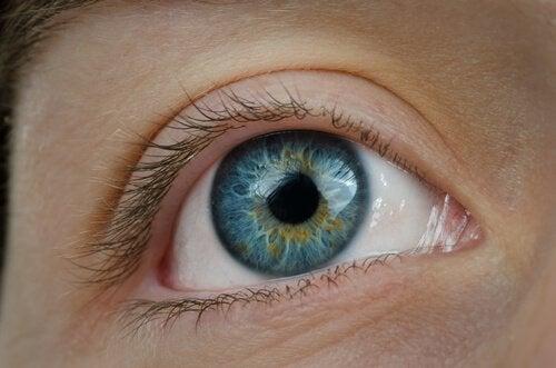 боровинките са полезни за здравето на очите