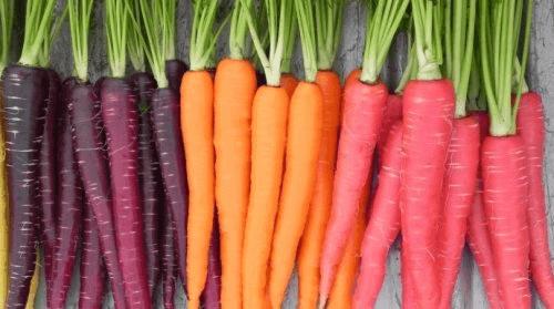 оранжеви и лилави моркови