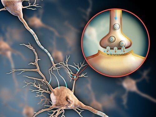 Функции на нервната система