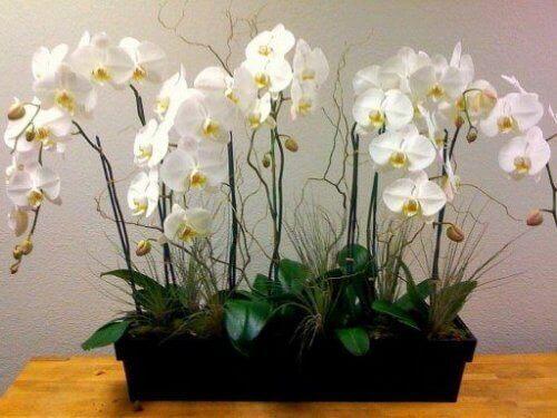 орхидеите пречистват въздуха в дома