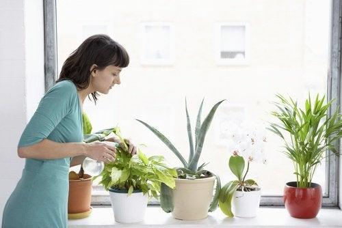 8 растения, които пречистват въздуха в дома ви