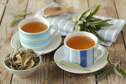 отвара от градински чай противо вагинално течение
