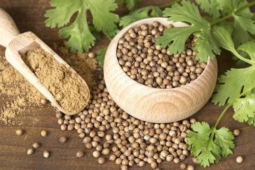 Семена от кориандър могат да намалят обилните цикли