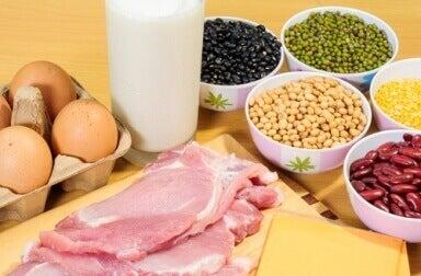 Животински протеини