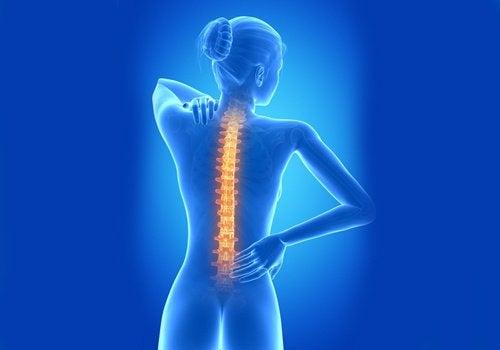 За здрав гръбначен стълб дръжте гърба си изправен