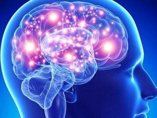 Най-полезните за мозъка билки и подправки