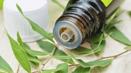 етеричното масло от чаено дърво е натурално средство за премахване на брадавици