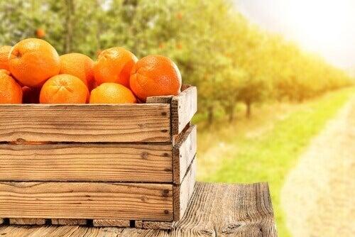 Ползите от консумацията на цитруси за закуска