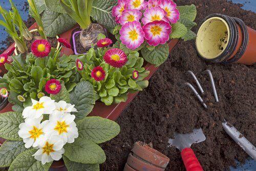 Използвайте водородния пероксид за цветята в дома си.