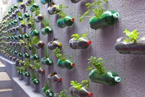 вертикална градина, направена от пластмасовите бутилки