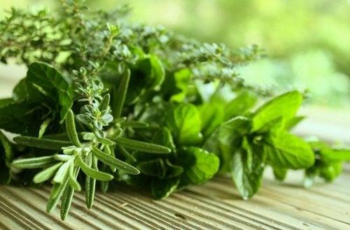 натурални билки за борба с лошия дъх
