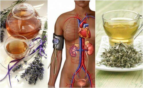 Понижете кръвното си налягане с тези пет билки