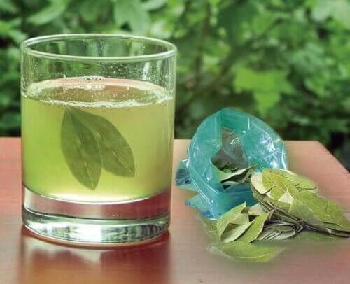 разбийте камъните в бъбреците с чая от листа от авокадо