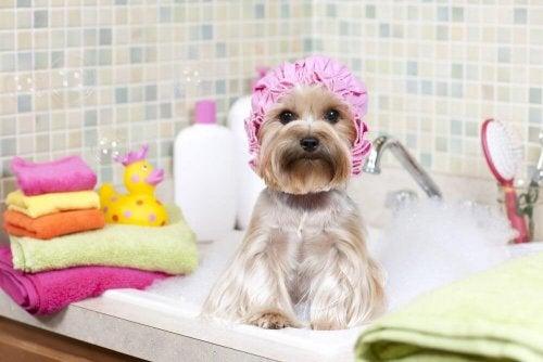 за чиста къща е нужно и домашният любимец да е с добра хигиена