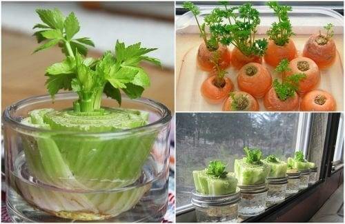 5 зеленчука, които лесно можете да отгледате отново