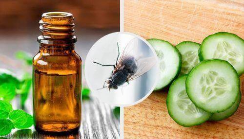 Прогонете мухите с тези 7 натурални репелента