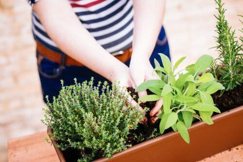 Мини градина с билки