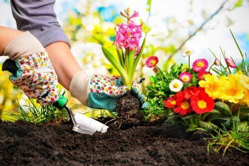5 идеи за създаване на красива мини градина у дома