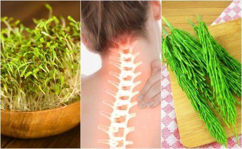 7 лечебни растения, които подобряват здравето на костите
