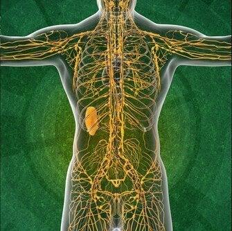Лимфната система: 4 интересни факта, които ще ви заинтригуват