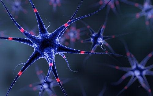 лещата се грижи за нервната система