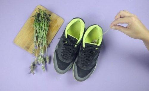премахнете миризмата на обувките с помощта на лавандула