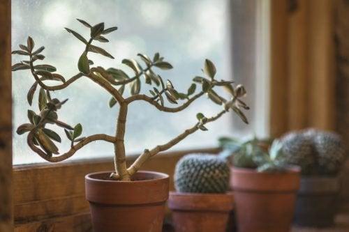 7 ползи от растенията в дома