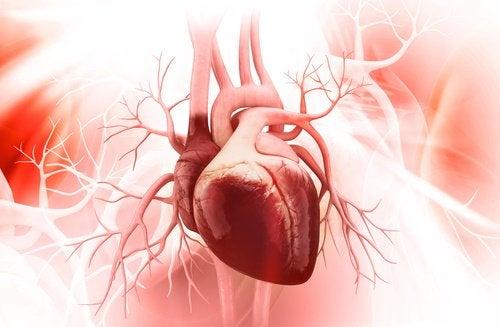 лещата подобрява здравето на сърцето