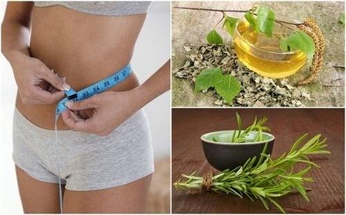 8 полезни билки, които ще помогнат да отслабнете здравословно