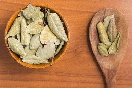 болдото е от тези билки, които спомагат храносмилателния тракт