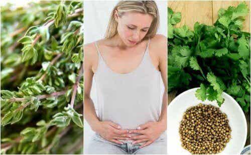 6 от билките с карминативен ефект