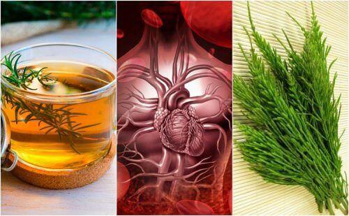 Как да подобрите кръвообращението си с тези 5 билкови средства
