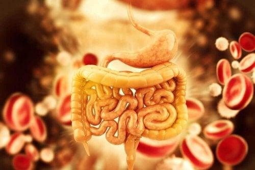 Как да приготвим 5 чая за детоксикация на дебелото черво