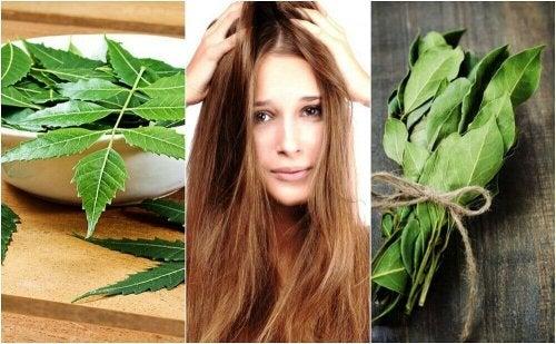 Има редица натурални рецепти с розмарин за красива и здрава коса
