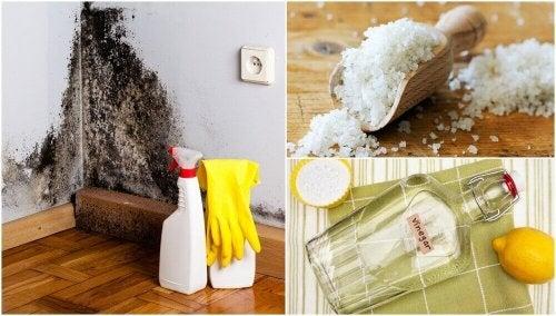 5 ефективни начини за премахване на влагата във вашия дом
