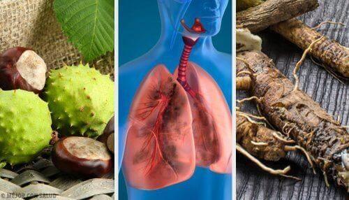 Опитайте тези 4 домашни средства за по-добро дишане и укрепване на белите дробове