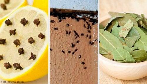 Отървете се от досадните насекоми по естествен начин