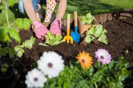 7 приложения на оцета в градината