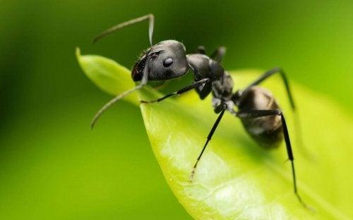 едно от приложенията на оцета е в градината е действието му като репелент