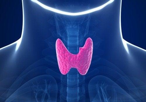 5 навика увреждащи щитовидната жлеза