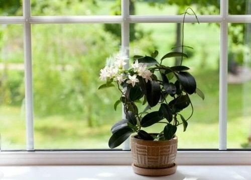 растенията в спалнята пречистват въздуха