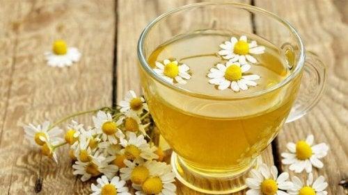 Приготвянето на билков чай от лайка ще ви помогне в борбата срещу безсънието.