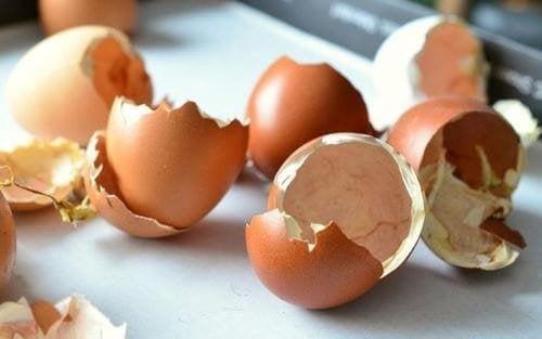 компост за градината от яйчени черупки