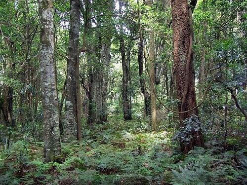 Натуралният компост от дървесна пепел е богат на калий и фосфор.